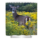 Deer In A Field Of Yellow Flowers Shower Curtain