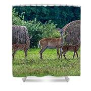 Deer In A Hay Field Shower Curtain