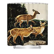 Deer In Forest Clearing Shower Curtain