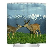 Ma-181-deer In Love  Shower Curtain