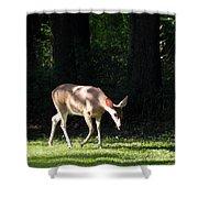 Deer In Shadows Shower Curtain