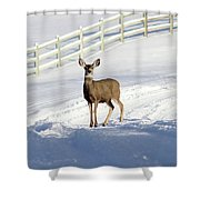 Deer In Snow Covered Road Shower Curtain