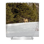 Deer In The Distance Shower Curtain