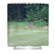 Deer In The Midst Shower Curtain