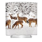 Deer In The Snow 2 Shower Curtain