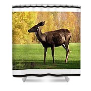 Deer In The Wild Shower Curtain