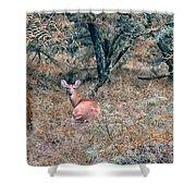 Deer In Woods Shower Curtain