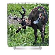 Deer Itch 2 Shower Curtain