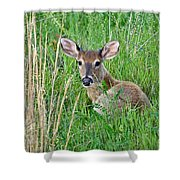 Deer Laying In Grass Shower Curtain