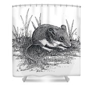 Deer Mouse Shower Curtain