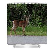 Deer On Road Shower Curtain