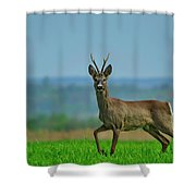 Deer On The Field Shower Curtain