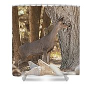 Deer On The Look Out Shower Curtain