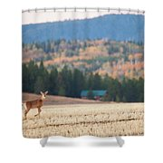 Deer Poses In The Fall Shower Curtain