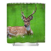 Deer Ruminating Shower Curtain