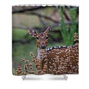 Deer V5 Shower Curtain