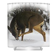 Deer With An Itch Shower Curtain