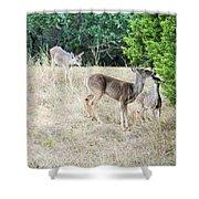 Deer24 Shower Curtain