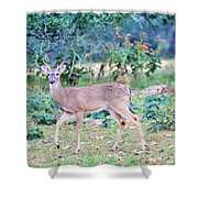 Deer42 Shower Curtain