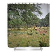 Deer48 Shower Curtain
