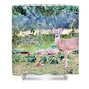 Deer50 Shower Curtain