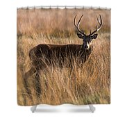 Deers Attention Shower Curtain