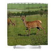 Deers On A Hill Pasture. Shower Curtain