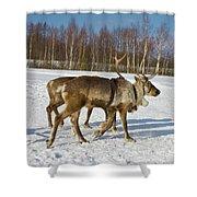 Deers Running On Snow Shower Curtain