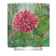 Dahlia Flower Grown In Apartment Garden Shower Curtain