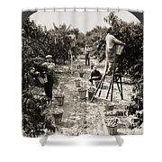 Delaware: Peach Orchard Shower Curtain