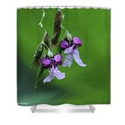 Delicate Blooms Of The Giant Alligator Flag Shower Curtain