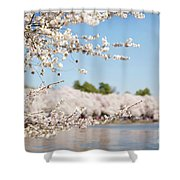 Delicate Blossoms Over The Tidal Basin Shower Curtain