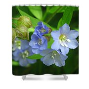 Delicate Blues Shower Curtain