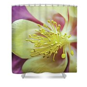 Delicate Columbine Nature Photograph Shower Curtain