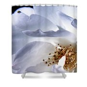 Delicate Curves Shower Curtain