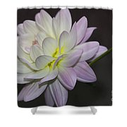 Delicate Dahlia Balance Shower Curtain