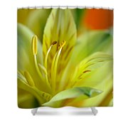 Delicate Darling Shower Curtain