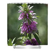 Delicate Desert Flower Shower Curtain