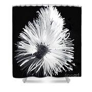Delicate Fleabane Daisy Shower Curtain