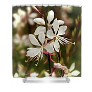 Delicate Gaura Flowers Shower Curtain