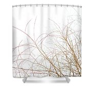 Delicate January Tree Branches Shower Curtain
