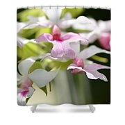 Delicate Orchids By Sharon Cummings Shower Curtain
