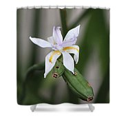 Delicate Pale Purple Iris Shower Curtain