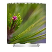 Delicate Pine Shower Curtain