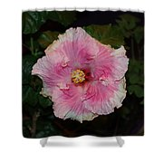 Delicate Pink Flower Shower Curtain