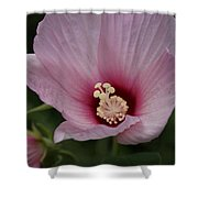 Delicate Pink Hibiscus Shower Curtain