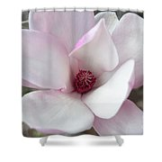Delicate Pink Magnolia Shower Curtain