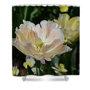 Delicate Pink Tulip 2 Shower Curtain