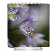 Delicate Purple Flowers Shower Curtain