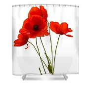 Delicate Red Poppies Vector Shower Curtain